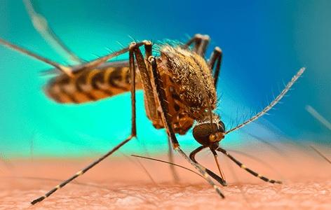 آیا امکان انتقال ویروس کرونا از طریق نیش پشه در تابستان وجود دارد؟